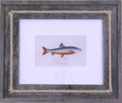 Edward Donovan Salmon - 1577397