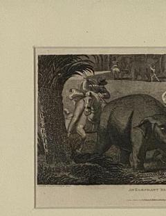 Elephant Capture Engraving England Circa 1820 - 1655261