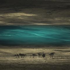 Eloi Ficat CONFINS Turquoise IX Photography - 1408982