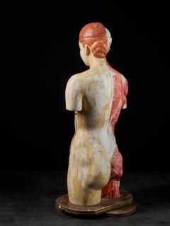 Female Life size Anatomical corche Torso Model Shimadzu Company - 2000307