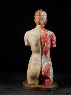 Female Life size Anatomical corche Torso Model Shimadzu Company - 2000308