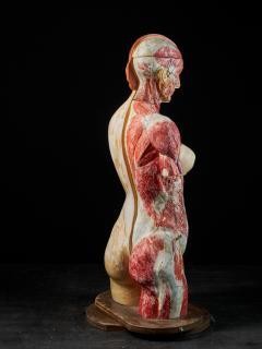 Female Life size Anatomical corche Torso Model Shimadzu Company - 2000309