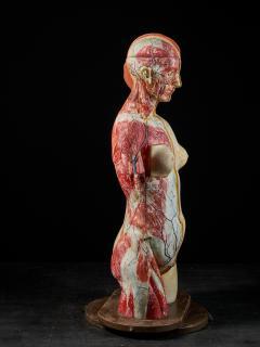 Female Life size Anatomical corche Torso Model Shimadzu Company - 2000310
