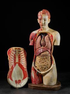 Female Life size Anatomical corche Torso Model Shimadzu Company - 2000312