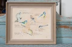 Framed French Vintage Aviaire Watercolor - 1409738