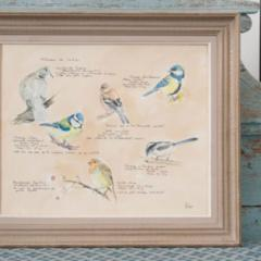 Framed French Vintage Aviaire Watercolor - 1409741