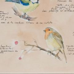 Framed French Vintage Aviaire Watercolor - 1409742
