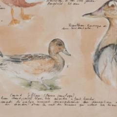 Framed French Vintage Canard Watercolor - 1409751