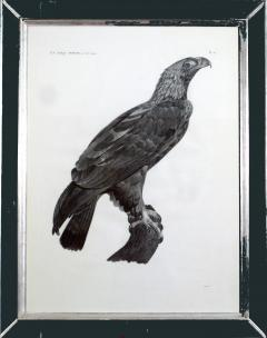 French Engraving by Savigny of the Eastern Imperial Eagle from the de lEgypte - 1972562