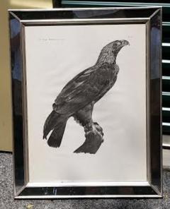 French Engraving by Savigny of the Eastern Imperial Eagle from the de lEgypte - 1972564