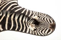 Genuine Zebra Rug - 899937