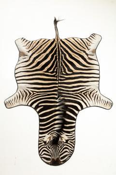 Genuine Zebra Rug - 899939