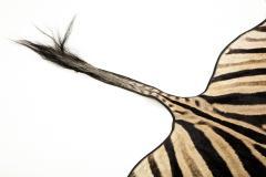 Genuine Zebra Rug - 899946