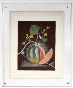 George Brookshaw A Pair of Melons - 763613