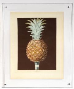 George Brookshaw A Pair of Pineapples - 763614