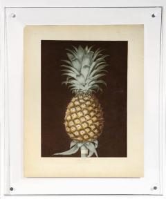 George Brookshaw A Pair of Pineapples - 763615