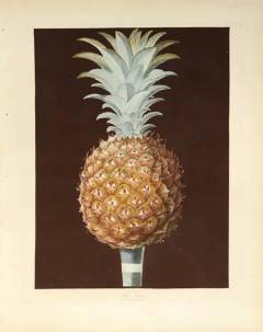 George Brookshaw A Pair of Pineapples - 764260