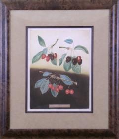 George Brookshaw George Brookshaw Cherries Plate IX 1812 - 1548272