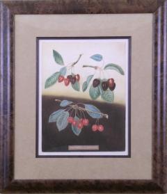 George Brookshaw George Brookshaw Cherries Plate IX 1812 - 1548293