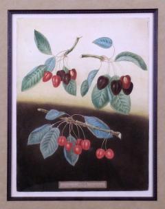 George Brookshaw George Brookshaw Cherries Plate IX 1812 - 1548294