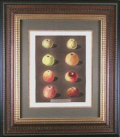 George Brookshaw George Brookshaw Plate 91 Apples 1812 - 1548267