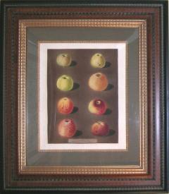 George Brookshaw George Brookshaw Plate 91 Apples 1812 - 1548273