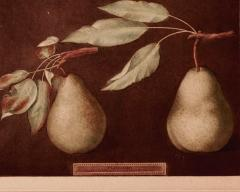 George Brookshaw George Brookshaw Print of Pears from Pomoma Britannica Plate LXXXVI  - 1635595