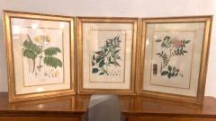 Group of Three Foliage Engravings by Nathaniel Wallich - 1255501