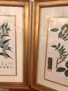 Group of Three Foliage Engravings by Nathaniel Wallich - 1255502
