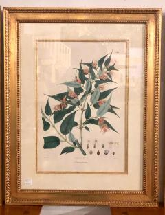 Group of Three Foliage Engravings by Nathaniel Wallich - 1255503