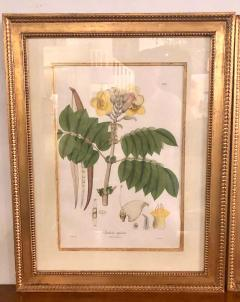 Group of Three Foliage Engravings by Nathaniel Wallich - 1255505