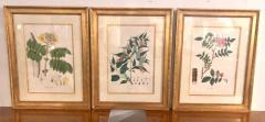 Group of Three Foliage Engravings by Nathaniel Wallich - 1255509