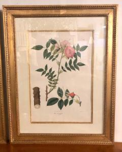 Group of Three Foliage Engravings by Nathaniel Wallich - 1255510