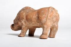 Han Dynasty Figure of a Pig - 1651220