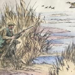 Henry Wilkinson Duck Shooting  - 1309591