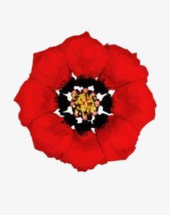 Howard Schatz Fashion Flowers Poppy - 1148187