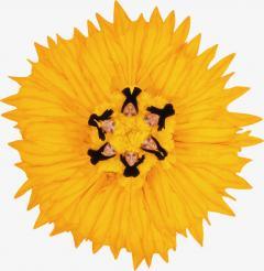 Howard Schatz Fashion Flowers Sunflower - 1148225