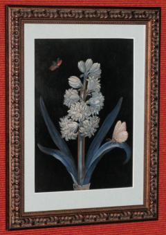 Hyacinths with Butterflies - 1020231