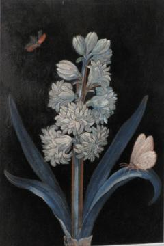 Hyacinths with Butterflies - 1020238