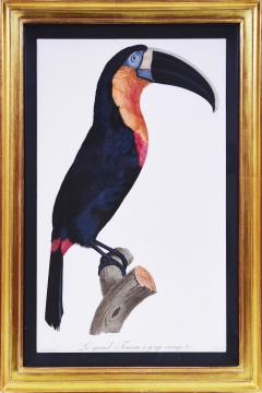 Jacques Barraband Barraband Set of Four Toucans engravings finished by hand - 1069787