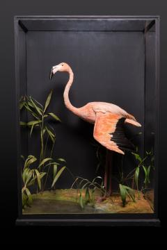 James Rowland Ward Rowland Ward glazed case with flamingo in a naturalistic setting - 2000411