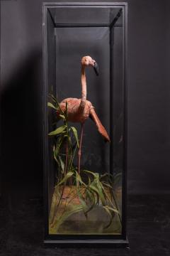 James Rowland Ward Rowland Ward glazed case with flamingo in a naturalistic setting - 2000413