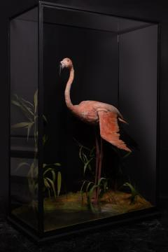 James Rowland Ward Rowland Ward glazed case with flamingo in a naturalistic setting - 2000415