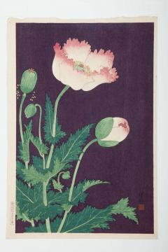 Japanese Showa Botanical Print of Poppies - 1215869
