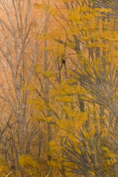 Japanese Two Panel Screen Late Autumn Forest Rare Obara Paper Art Screen - 1950275