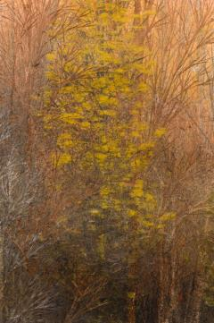 Japanese Two Panel Screen Late Autumn Forest Rare Obara Paper Art Screen - 1950331