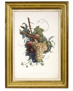Jean Louis Prevost Collection des Fleurs et des Fruits a Set of Floral Designs - 763543