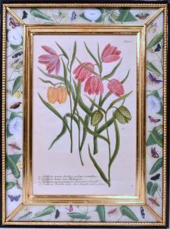 Johann Wilhelm Weinmann 18th Century Johann Weinmann Engravings of Flowers a set of Twelve - 1619390