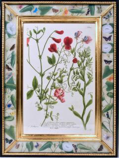 Johann Wilhelm Weinmann 18th Century Johann Weinmann Engravings of Flowers a set of Twelve - 1619391