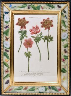 Johann Wilhelm Weinmann 18th Century Johann Weinmann Engravings of Flowers a set of Twelve - 1619392